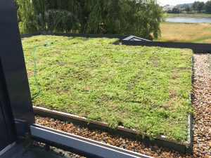 Kingsley Roofing complete sedum green roof on residential property in Chichester, Sussex.
